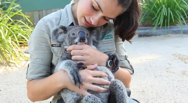 malenkiy koala i krasivaya devyshka