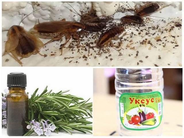 народный способ избавится от тараканов без химии, простой и рабочий